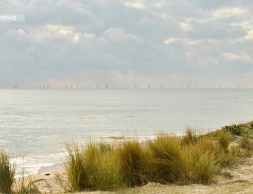 Éolien offshore : des recours rejetés par la cour administrative d'appel de Nantes
