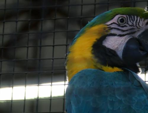 Bourse aux oiseaux : 200 éleveurs et 4000 espèces aux Herbiers