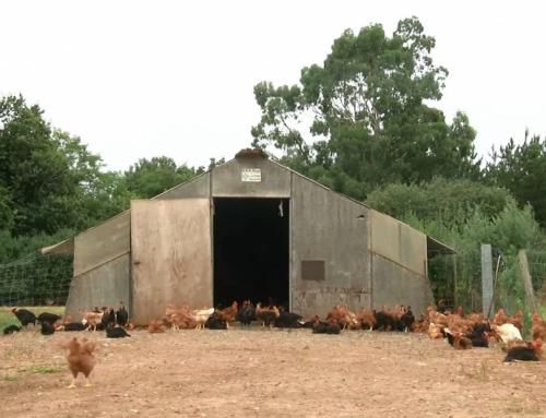 Après le confinement, l'essor de la vente à la ferme se poursuit