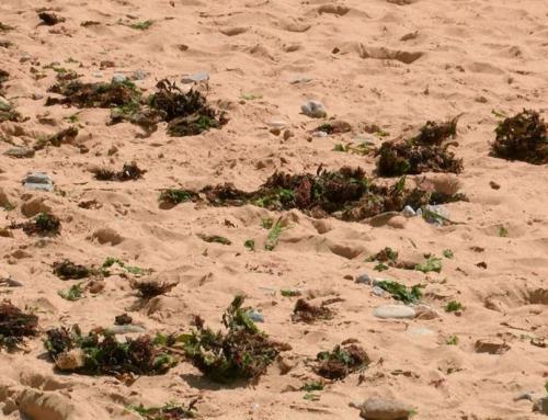 Sensibilisation à la préservation de la laisse de mer