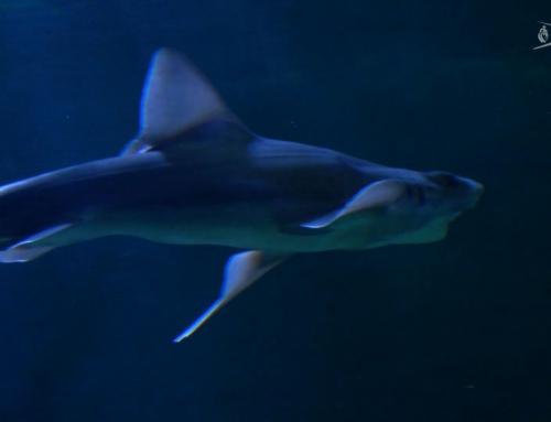 Une plongée dans les mers et les océans à l'Aquarium de Vendée