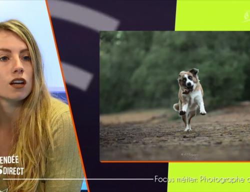 Focus métier : photographe animalier