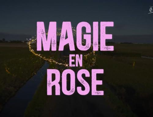 Magie en Rose : le teaser