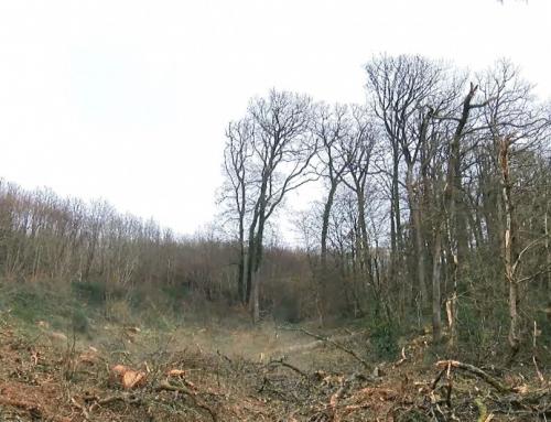 ONF : opération de débardage par câble en forêt domaniale