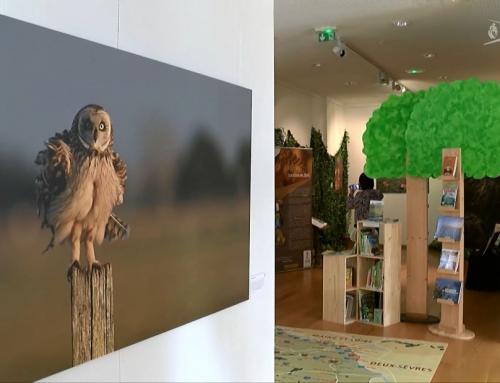 Une exposition sur la nature et les sens à La Châtaigneraie