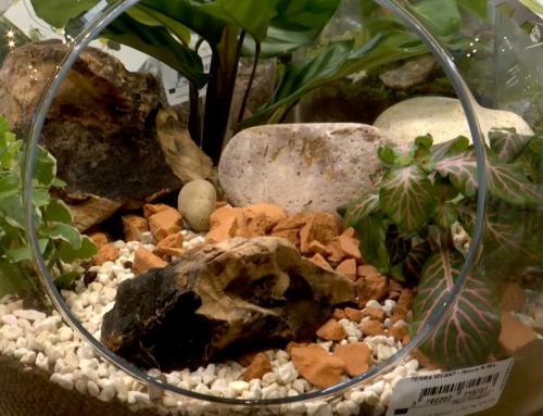 L'instant jardin : les terrariums