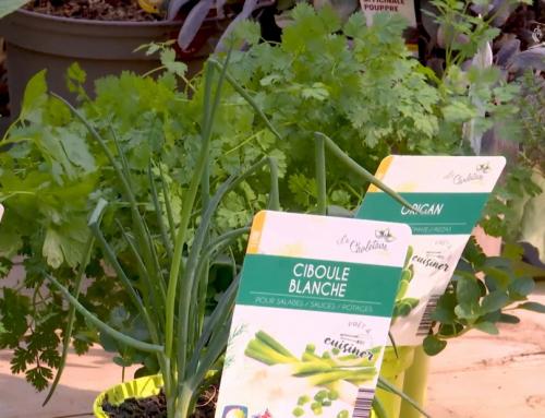 L'instant jardin : les plantes aromatiques