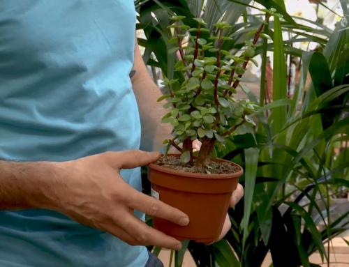 L'instant jardin : les succulentes