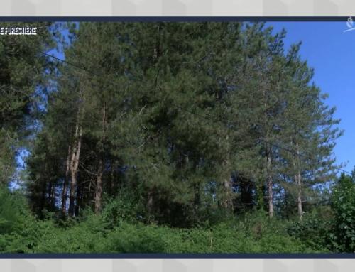 Une charte forestière pour reboiser le territoire