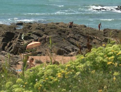 Environnement: le rôle de la laisse de mer expliqué sur la plage