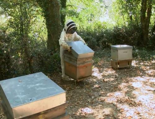 Environnement : La Folie de Finfarine récolte son miel