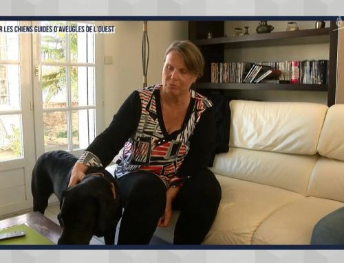 Focus sur l'association des chiens guides d'aveugles de l'ouest